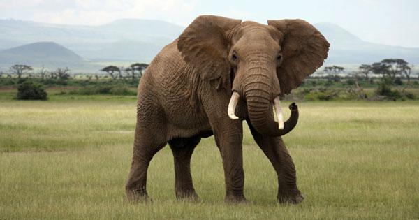 Free porno elefant