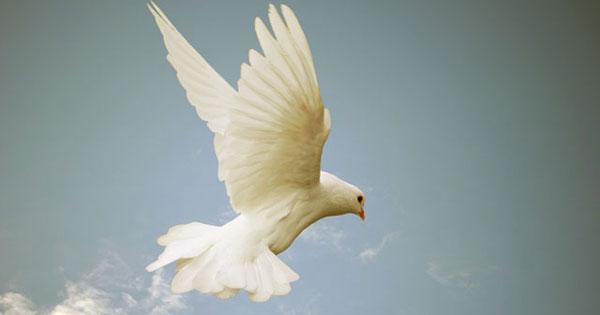 Who Is The Holy Spirit God Holy Spirit